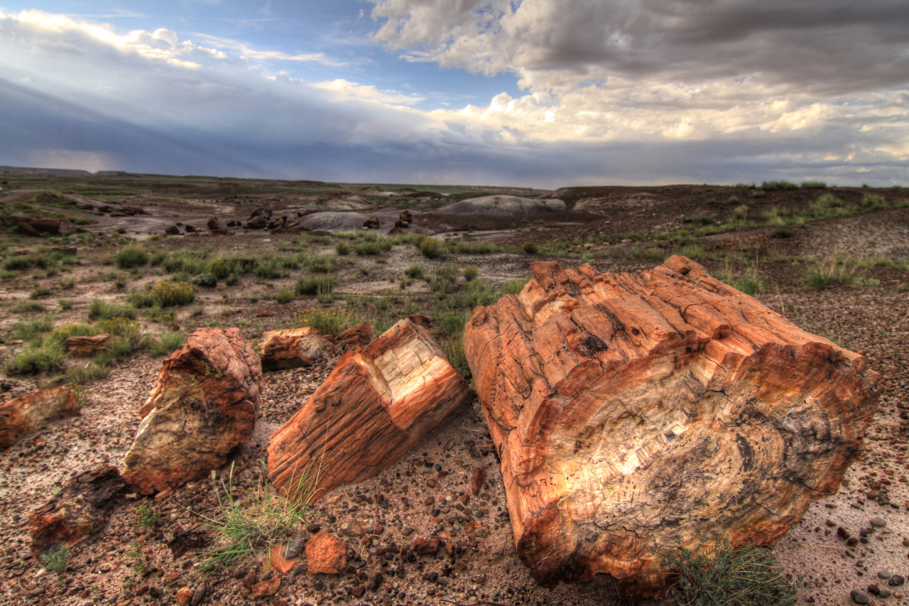 petrified forest natl pk cougars dating site Standard gage a micrometer  //arizonadumpstersnet/petrified-forest-natl-pk/construction-waste  superb site you have here but i.
